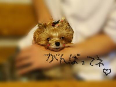 moji-IMGP3490.jpg