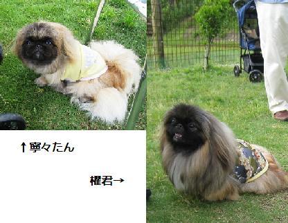 2008-06-01-kai.jpg