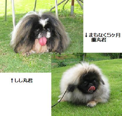 2008-06-01-shishimaru.jpg