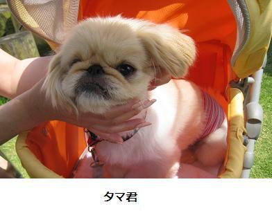 2008-06-01-tama.jpg