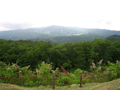 2008-06-06-5.jpg