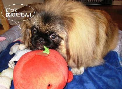 2008-1-20-kai2.jpg