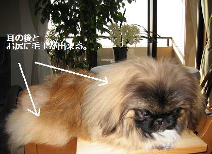 2008-1-9-kai.jpg