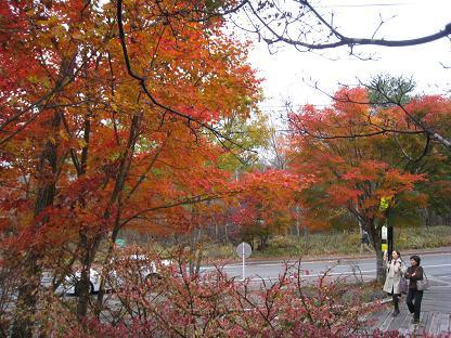 2008-10-31-6ya-1.jpg