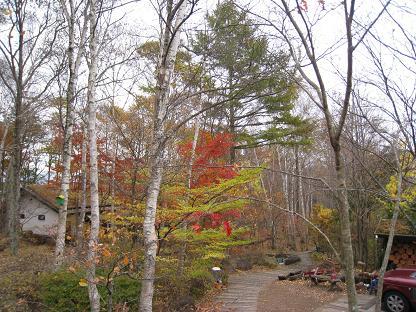 2008-10-31-6ya-3.jpg