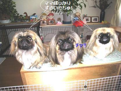 2008-11-12-7.jpg