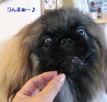 2008-3-31-kai1.jpg