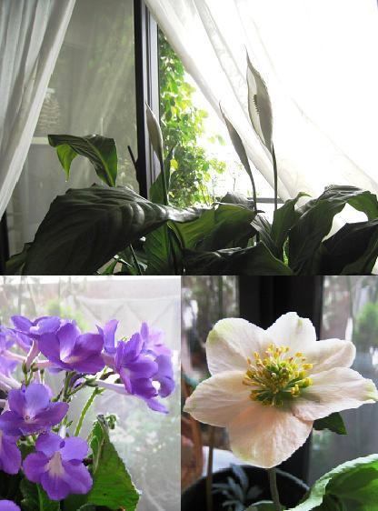 2008-4-18-2.jpg