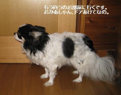 2008-4-2-ku-4.jpg