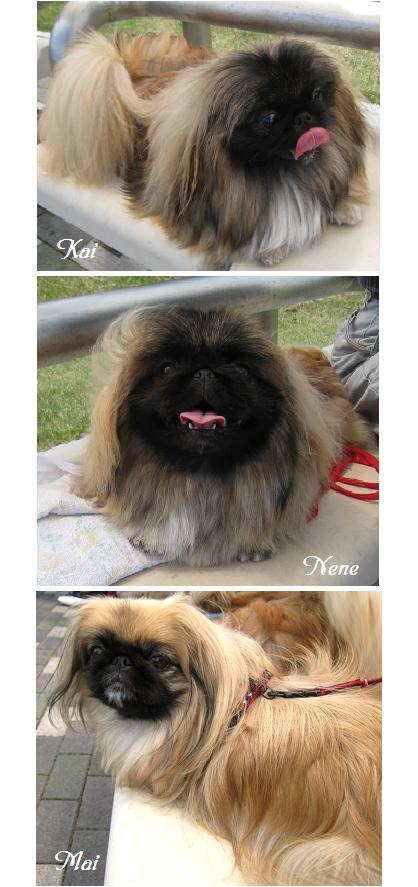 2008-4-20-kai-nene-mai.jpg