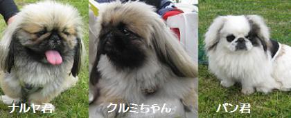 2008-5-11-kurumi-p.jpg