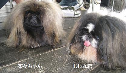 2008-5-11-shishi.jpg