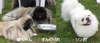 2008-5-11-yuu.jpg