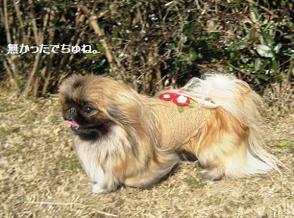 2009-01-03-9b.jpg