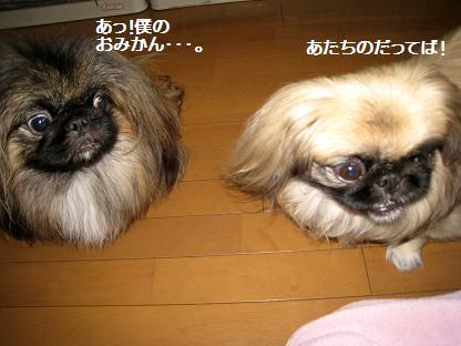 2009-01-14-6.jpg