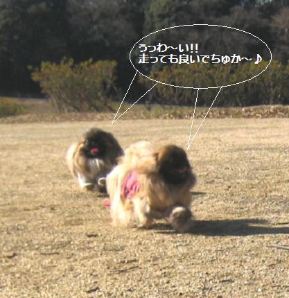 2009-01-25-2.jpg
