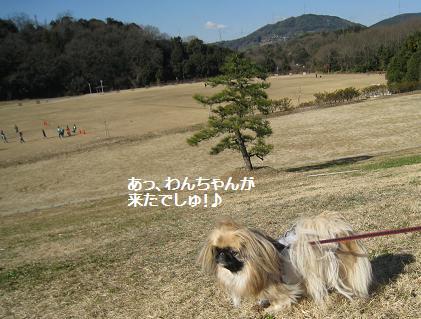 2009-01-25-9.jpg
