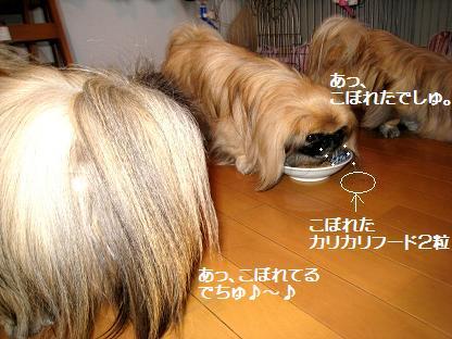2009-01-28-2b.jpg