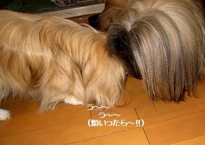 2009-01-28-5.jpg