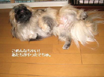 2009-01-30-3.jpg