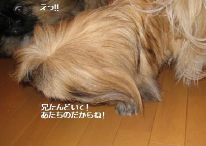 2009-02-03-9.jpg