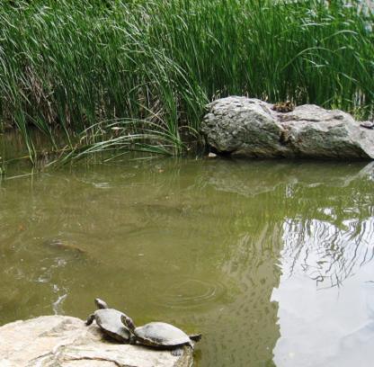 2009-05-31-10.jpg