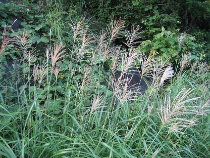 sansou-2008-8-1-1.jpg