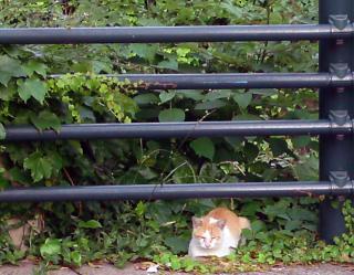 猫リングサイド