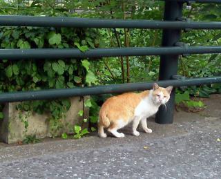 猫リングサイド2