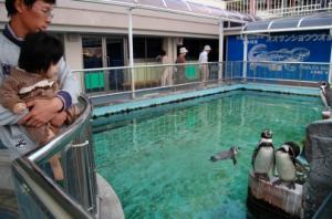 s-ペンギンを見るアン子