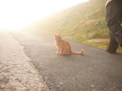 Cat walk2