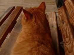 Cat Champs 3