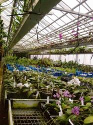 orchidarium 3