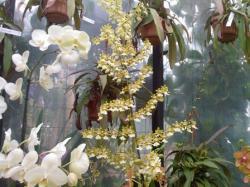 orchidarium 6