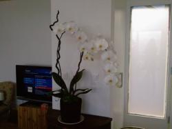 orchidarium 8