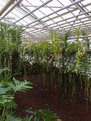 Orchidarium.jpg