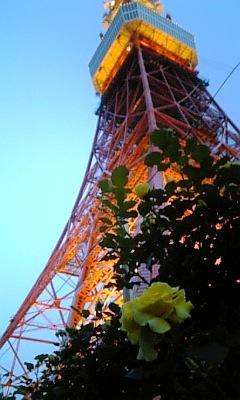 東京タワーと薔薇1