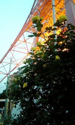 東京タワーと薔薇2