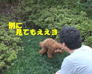 DSC02369_20090827115219.jpg