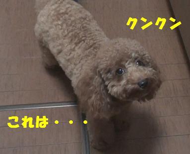 DSC02845.jpg