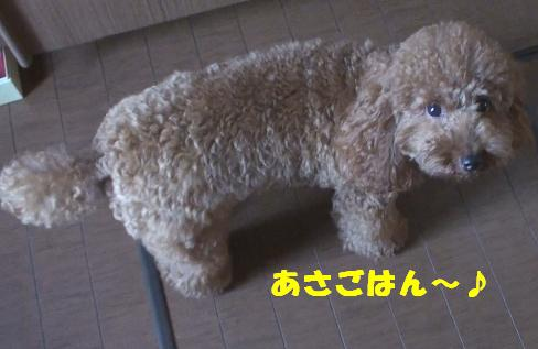 DSC02980.jpg
