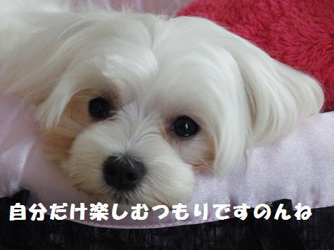 2009_11130030.jpg