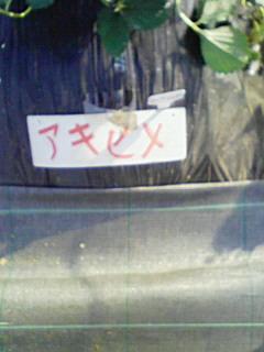 マサプ→フォト
