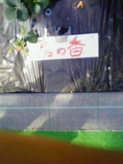 マサプ→ブログフォト