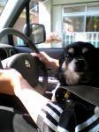 かっこよくドライブ♪