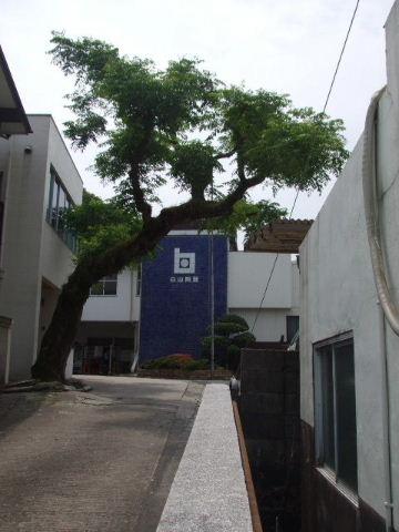 2009_060310120010.jpg