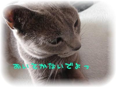20061127194250.jpg
