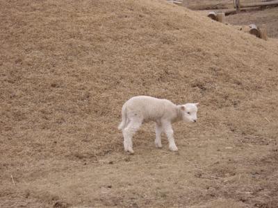 ミルク牧場⑦