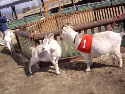 ミルク牧場⑪