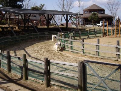 ミルク牧場⑫